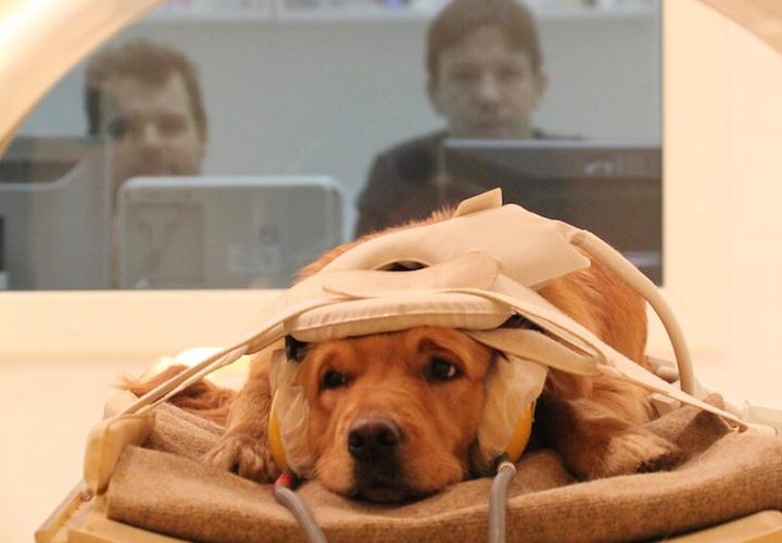 Vertu Medical Solución veterinaria